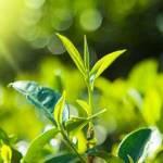 Q10 mit Stevia